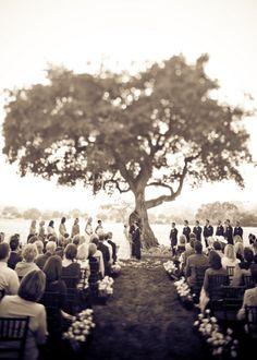 Oak Tree Ceremony Backdrop | Glamorous Vineyard Wedding | Lovelyfest Event Design