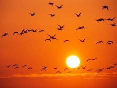 Birds fill an orange sky over Germany's Wattenmeer National Park. (Photograph by Norbert Rosing)