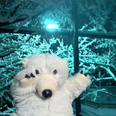 The Polar Teddy Bear joy with snow!