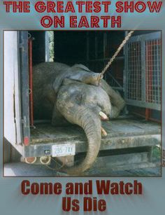 circuses should never use animals for entertainment.