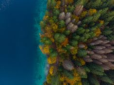 Colorful forest by lake side, aerial from above photo by on Envato Elements Hyacinth Flowers, Lake Side, Lake Water, Autumn Forest, Wallpaper Backgrounds, Wallpapers, Drone Photography, Color Card, Aerial View