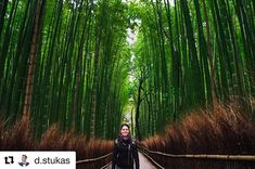 #Repost @d.stukas with @get_repost  Bamboo forest in #Arashiyama. Out of this world experience. If you visit it once you will have a memory that will accompany you for the rest of your life. What a better way to have that memory than with the #loveofmylife @orianna2ramos . #reiseliv #reisetips