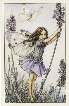 The Lavender Fairy, from Flower Fairies of the Garden, 1944, by Cicely Mary Barker