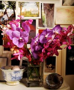 orchids lovely orchids