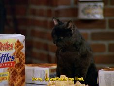 When you're at brunch and the waiter asks you if you need anything else | 27 Times Salem The Cat Understood You