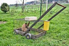 eco friendly lawn mower Just A Car Guy: lawnmower