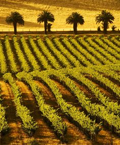 Barossa Valley, Vineyards, South #Australia