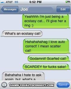 Ecstasy cat, scatter cat, scarfed cat