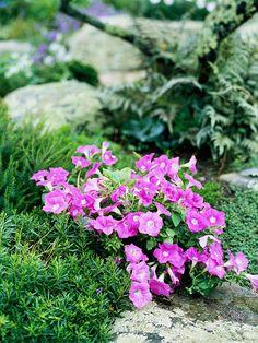 Rock Garden Design Ideas: Annuals for the Rock Garden