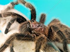 close-up shot of a spider. - Extreme close-up of a spider on animals bone.