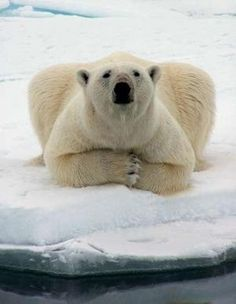 love lelaurenh Animals And Pets, Funny Animals, Cute Animals, Wild Animals, Baby Animals, Love Bear, Tier Fotos, Fauna, Endangered Species