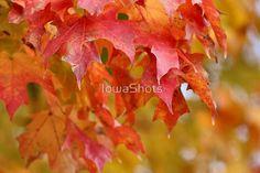 Fall color by IowaShots