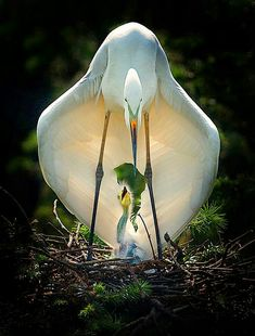 Pin by renee skattum on beautiful creatures красивые птицы, Wild Life, Pretty Birds, Beautiful Birds, Animals Beautiful, Beautiful Pictures, Nature Animals, Animals And Pets, Cute Animals, Exotic Birds