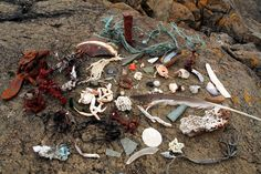 beachcombing finds | Cycling the Kystriksveien - Day 8