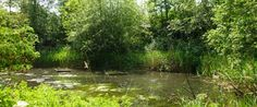 Camley Street Natural Park in Kings Cross London