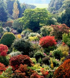 Gardens of Crathes Castle in Banchory, Scotland (by yorkshirelass49 on flickr)