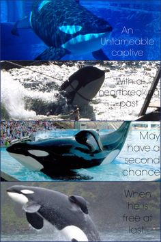 Tilikum - Freedom is Calling! Stay strong big boy! 2014 is the Year of Empty the Tanks!