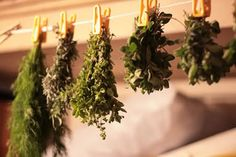 For Anyone with Herbs in the Garden:  All About Drying and Freezing Herbs by Kalyn Denny