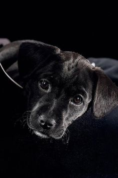 i am just going to stare at this adorable puppy face all day and feel nothing but hope and love.
