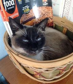 Loving her forever home and her very own basket :).