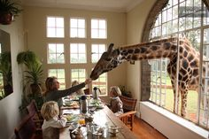 Giraffe Manor in Nairobi, Kenya. Giraffes join you for breakfast! I would love to do this!!!!