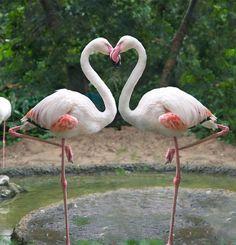 Beautiful Flamingo's