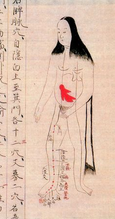Pregnancy | Anatomical illustration that provide a unique perspective on the evolution of medical knowledge in Japan during the Edo period (1603-1868)