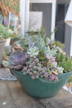Succulents are Eco-friendly as well as pet friendly. Great design elements for home and garden in vintage containers or collectible pots by Succulent Style — Shop at Seaside Gallery and Goods in Newport Beach, California