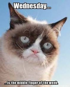 Grumpy Cat's view on