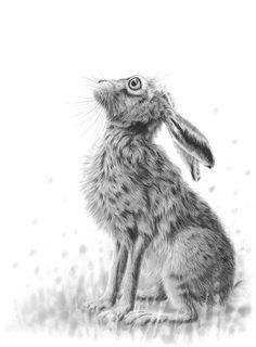 Hare Gazing II A4.jpg