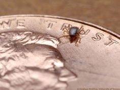 #12 reasons to take ticks seriously - First Coast News: First Coast News 12 reasons to take ticks seriously First Coast News As the most…