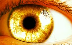 Amber eyes are super rare. Learn all about amber eyes, see pictures of people with this eye color and learn why they are so unique. Warlock Class, Half Elf, Jace Lightwood, Red Rising, Shadowhunters, Amber Eyes, Gold Aesthetic, Apollo Aesthetic, Aesthetic Eyes