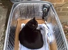 Keep your outdoor or stray cat warm and sheltered in the winter! Cut a hole in the front of a plastic storage bin and install a cat door or cover the opening with carpet flaps and duct tape. Heated Cat House, Heated Cat Bed, Feral Cat House, Feral Cats, Ferrel Cat Shelter, Cat Shelters For Winter, Outside Cat House, Cat Perch, Outdoor Cats