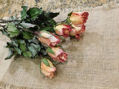 Items similar to Dried Roses, Roses, Coral dried roses, on Etsy Yellow Roses, Pink Roses, Drying Roses, Preserved Boxwood, Coral Pink, Floral Wreath, Peach, Etsy, Color