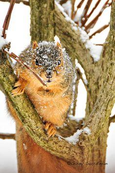Snow Squirrel | Flickr - Photo Sharing!