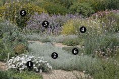 1 : Convolvulus cneorum  2 : Artemisia lanata  3 : Salvia fruticosa  4 : Asphodelus fistulosus  5 : Phlomis fruticosa  6 : Thymus ciliatus