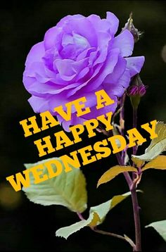 Have A Happy Wednesday Happy Wednesday Images, Wednesday Greetings, Wednesday Wishes, Good Morning Wednesday, Good Morning Good Night, Good Morning Images, Fb Quote, Morning Messages, Corporate Gifts