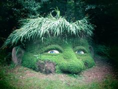 Lost Gardens of Heligan, Cornwall mit Kindern, Riese, Giant