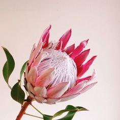 instagram.com/paikohawaii/ #Exoticflowers