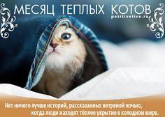 Месяц тёплых котов))