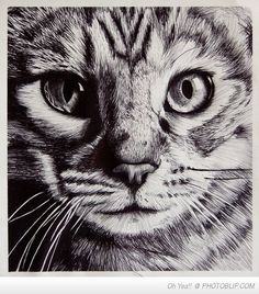 cat pen and ink drawings - Google Search