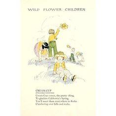 Wild Flower Children c1918 Cream-cup Canvas Art - Janet Laura Scott (18 x 24)