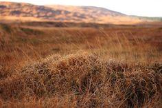 A golden day in Connemara  © Annie Japaud Photography