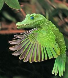 subscribe to grav3yardgirl on YouTube and give an alligator its wings