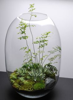 vase with mini garden or terrarium - this one is so lovely!glass vase with mini garden or terrarium - this one is so lovely!glass vase with mini garden or terrarium - this one is so lovely!glass vase with mini garden or terrarium - this one is so lovely! Air Plants, Garden Plants, Indoor Plants, Succulents Garden, Cactus Plants, Cactus Flower, Plantas Indoor, Paludarium, Deco Floral
