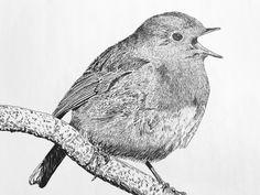 Robin 2017 Robin, Fine Art, Bird, Illustration, Animals, Animaux, European Robin, Robins, Birds