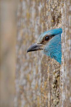"""Peek-a-boo!"" by Leonardo Fava"