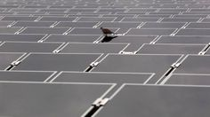 Près de 4000 panneaux photovoltaïques bientôt installés à Houdeng-Goegnies #spaque #remediation #rehabilitation #safea #decharge #landfills