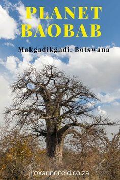 Planet Baobab camp, Makgadikgadi salt pans, #Botswana #Makgadikgadi #travel #Africa