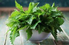 Medicinal Plants, Natural Health, Natural Remedies, Plant Based, Herbalism, Vitamins, Healthy Living, Seasonal Allergies, Journey